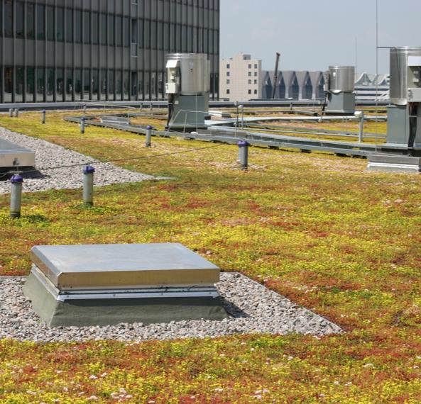 Экономичная зелёная крыша